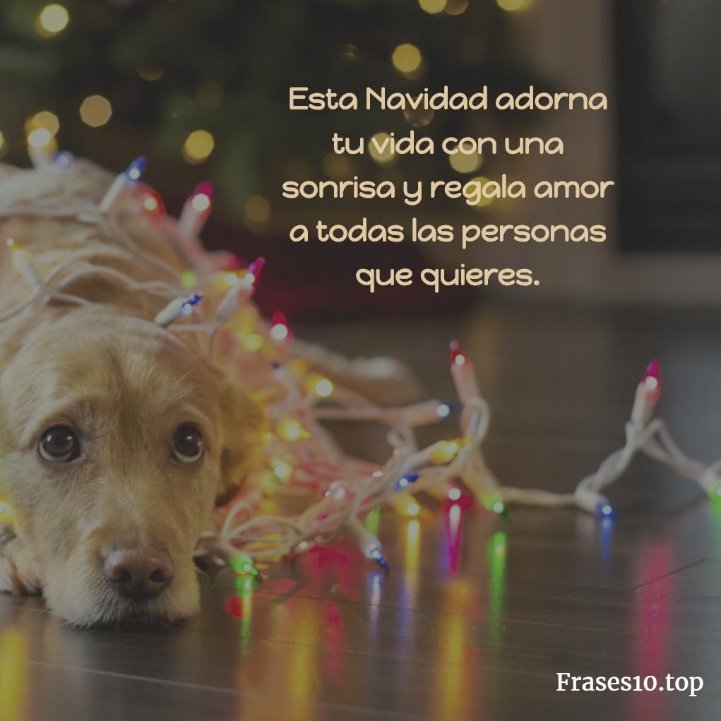 Frases De Navidad Para Amigos Y Familia Muy Bonitas